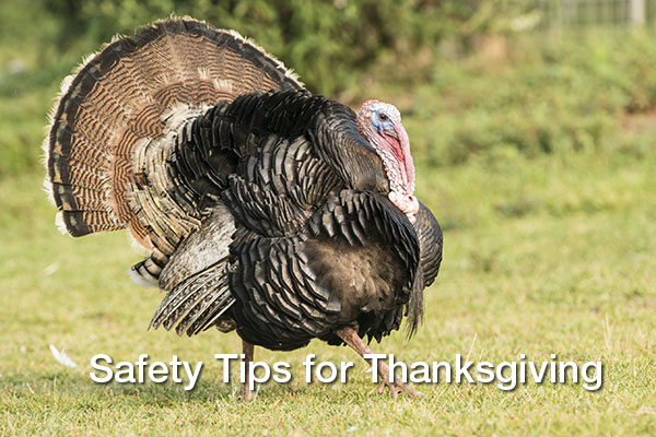 Avoid Turkey Day Disaster: Safety Tips for Thanksgiving