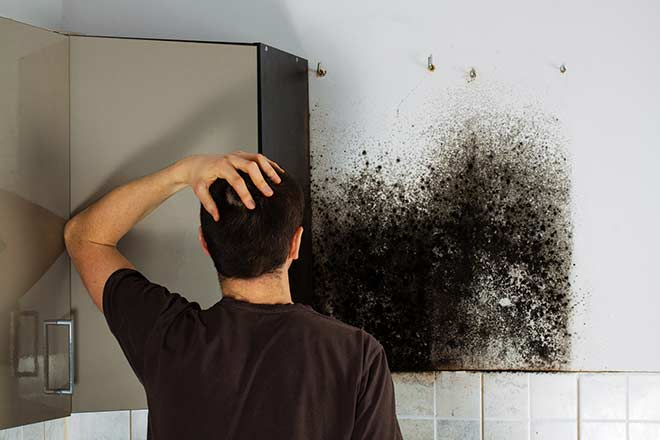 Is Mold Damage Covered by Homeowners Insurance?