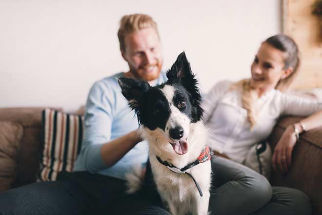 Do I Need Animal Liability Coverage?